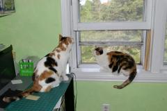 20110628_kdSasha_window-2