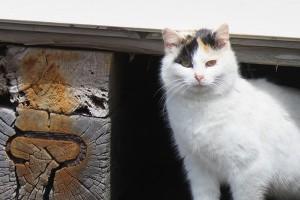 2015-05-06_cat